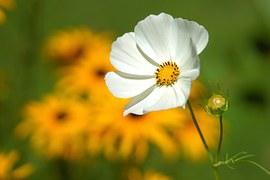 flower-180035__180