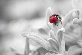 ladybug-796483__180
